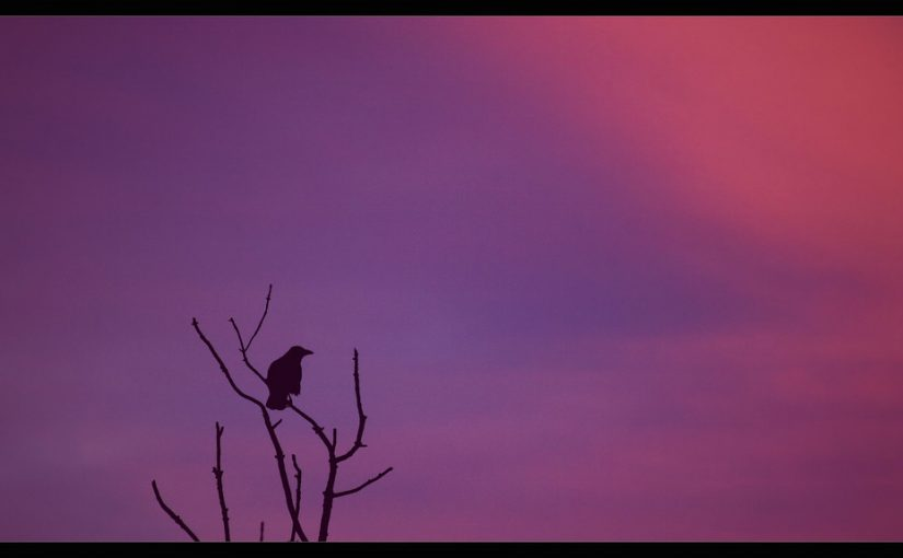 Das Bild zeigt einen einsamen Vogel auf einem Ast im Morgengrauen.